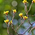 Photos: 旬の花たち