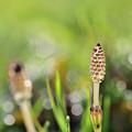 Photos: 春やね~♪
