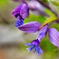 Photos: 紫の飛行機