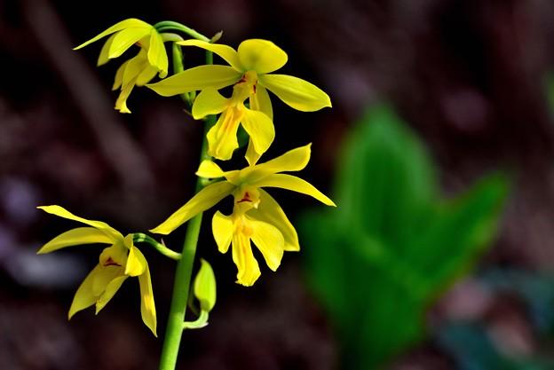 Photos: 鮮やかな黄色で