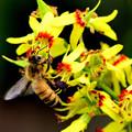 Photos: 夏向きの花