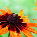 Photos: 夏の花