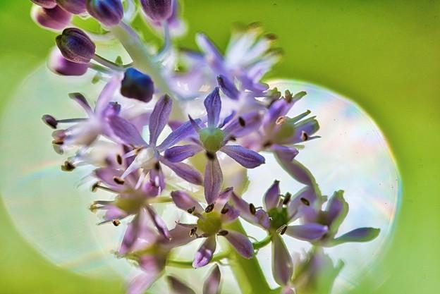 Photos: 秘密の花園