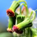 Photos: これが花。