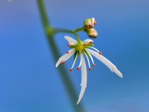 花を大きく