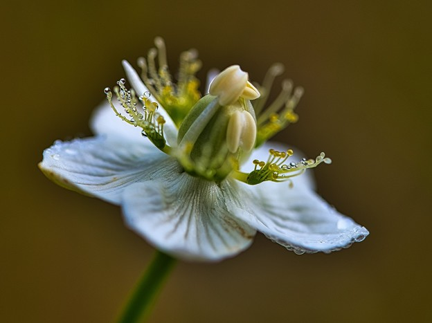 Photos: 湿地に今年最後の花