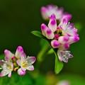透明感のあるお花