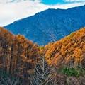 Photos: 立ち枯れの木と