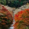 Photos: 紅と白の彩