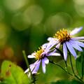 Photos: 秋の花たち