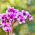 Photos: 小さな花束