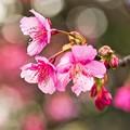Photos: 迎春