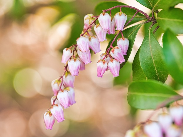Photos: 春色