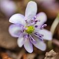 Photos: 紫