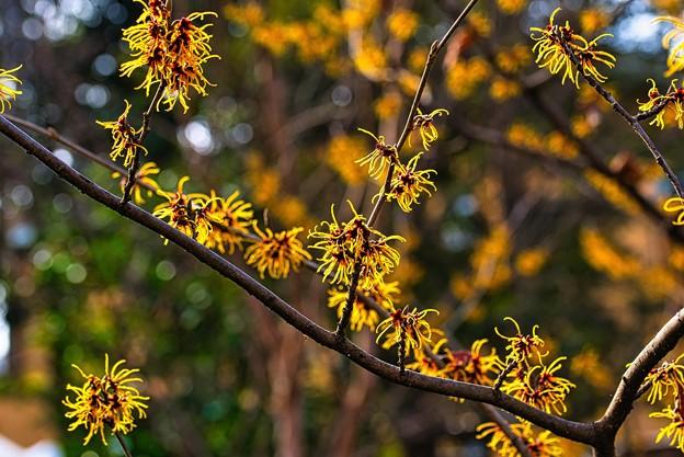 Photos: 光る花