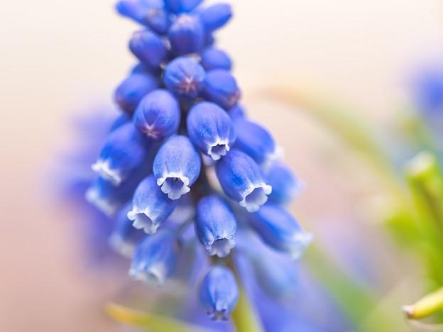 Photos: 春めいて