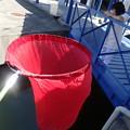 写真: 競艇場でウナギ採り (3)