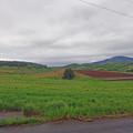 写真: 富良野の景色 (5)