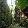 バリバリ岩(南大東島) (1)