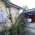 写真: 台風の被害 (2)