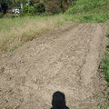Photos: ニンニクを植える
