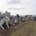 写真: 芋掘り大会 (7)