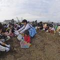 写真: 芋掘り大会 (8)