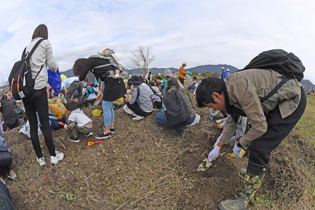 芋掘り大会 (11)