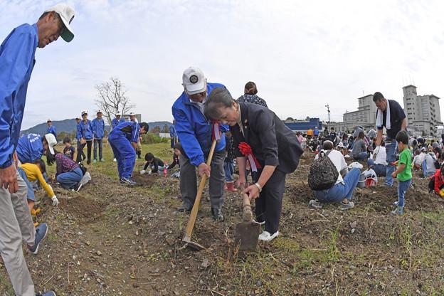 芋掘り大会 (13)