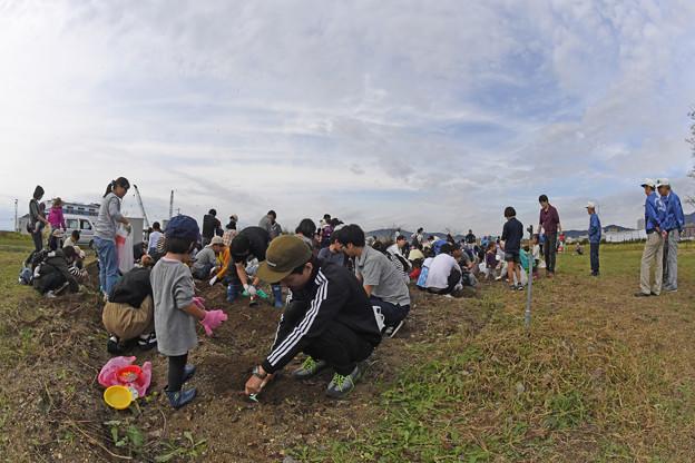 芋掘り大会 (20)