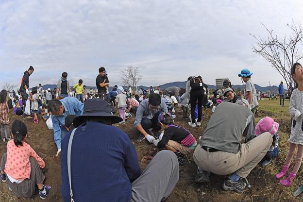 芋掘り大会 (31)