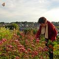 Photos: 畑で飛ぶアサギマダラ♂ (1)