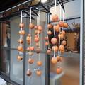 写真: 今年の干し柿