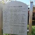 岡田中央公園 (5)