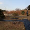 ミカン畑に防草シートを貼る (1)