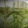 葦の造形物(新川) (5)