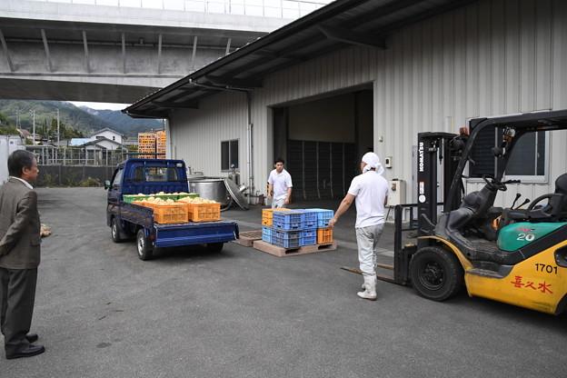 芋焼酎製造工程(喜久水) (2)