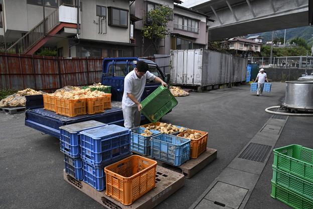 芋焼酎製造工程(喜久水) (3)