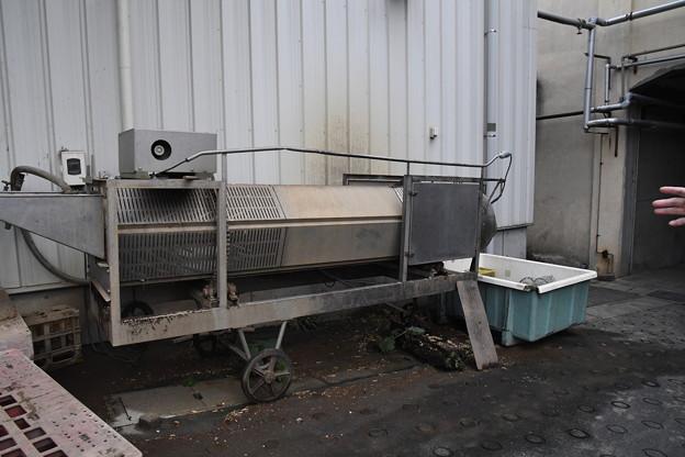 芋焼酎製造工程(喜久水) (4)