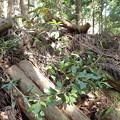 林の中のヒコバエ