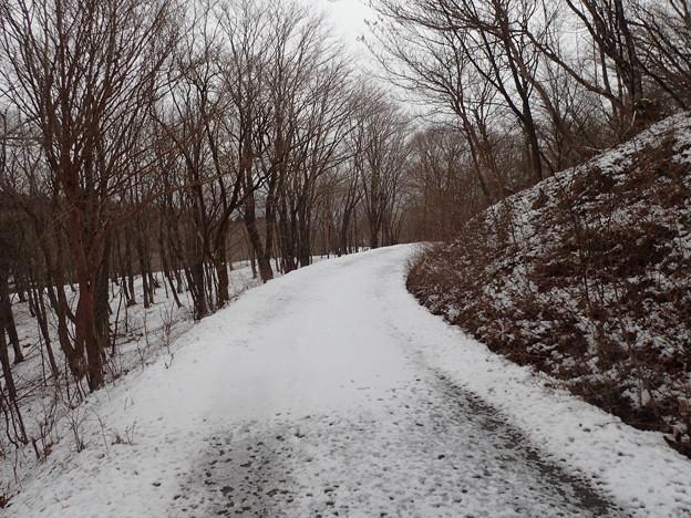薄っすらと雪の積もったブナ・ミズナラ林