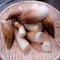 2月20日収穫(蒲郡・幡豆)