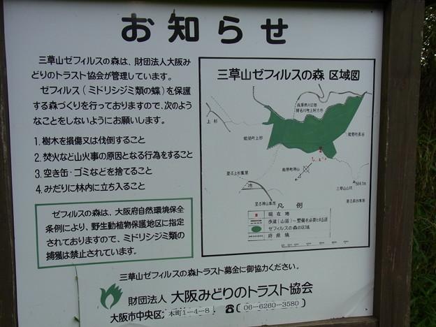 三草山ゼフィルスの森 (1)