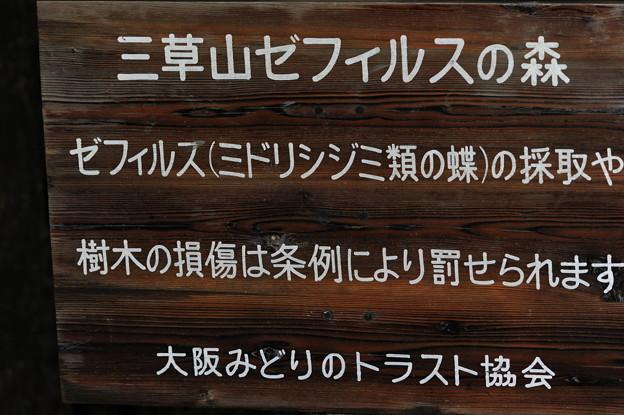 三草山ゼフィルスの森 (2)