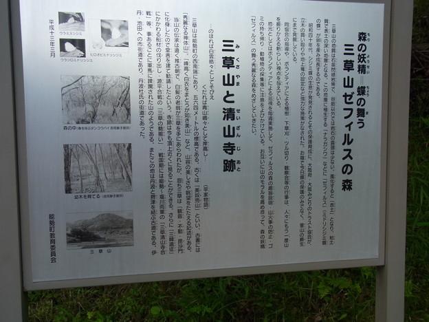 三草山ゼフィルスの森 (3)