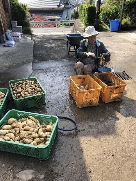 Photos: 芋洗い