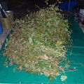 Photos: 蕎麦収穫