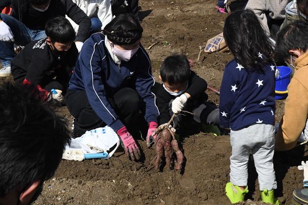 芋掘り大会2020 (45)