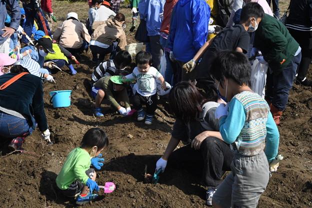 芋掘り大会2020 (49)
