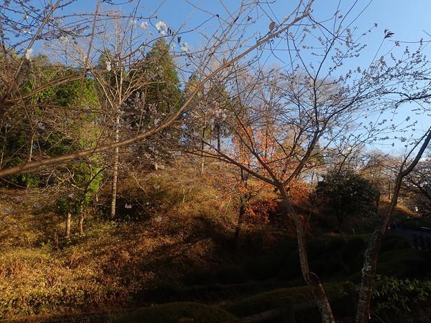 Photos: 小原村にて (5)